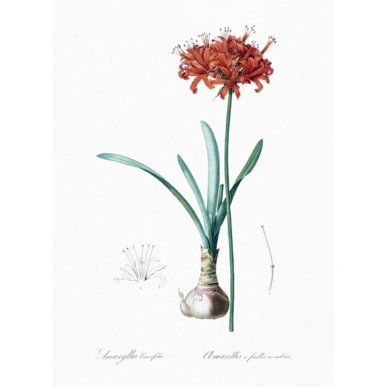 Fragments at Ephesus illustrated by Luigi Mayer