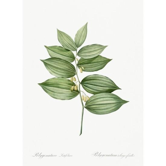 Mount Balkan illustrated by Luigi Mayer