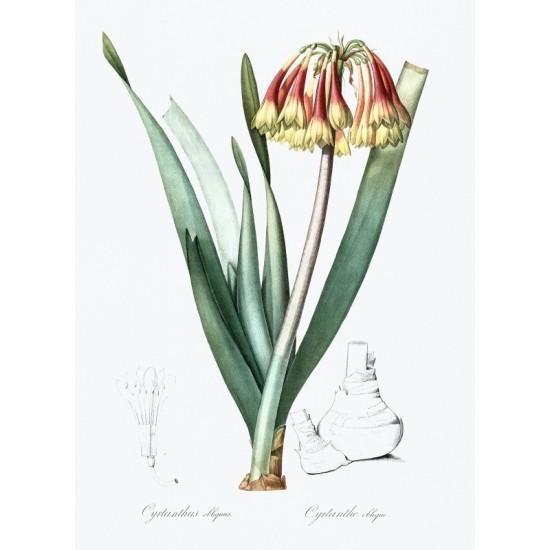 Port of Latachia illustrated by Luigi Mayer