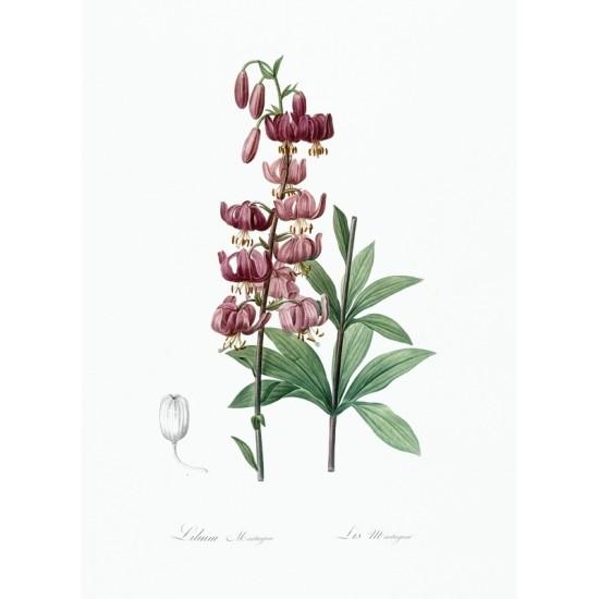 Stadium at Ephesus illustrated by Luigi Mayer