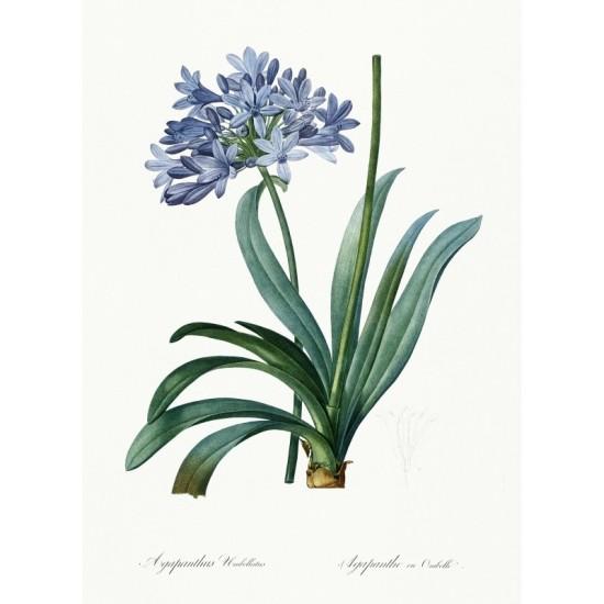 Temple of Solomon illustrated by Luigi Mayer