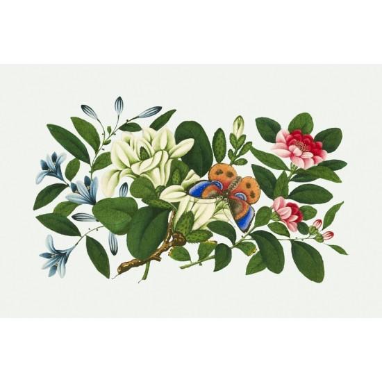Ascidiae–Seescheiden by Ernst Haeckel