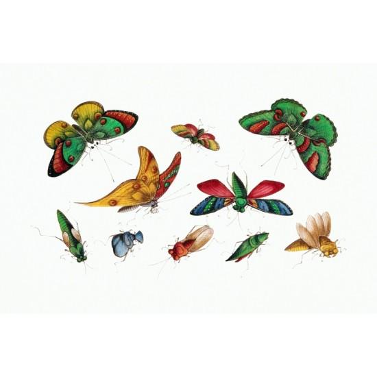 Ascomycetes–Schlauchpilze by Ernst Haeckel