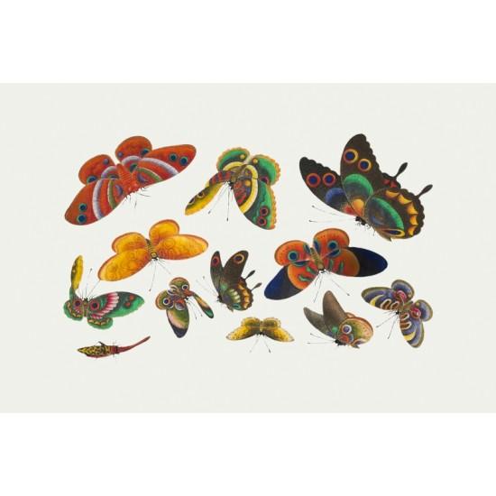 Aspidonia–Schildtiere by Ernst Haeckel